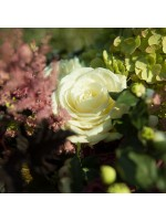 gros plan rose blanche