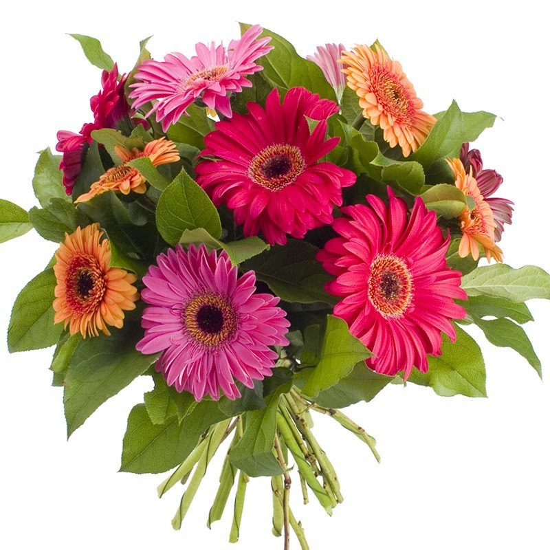 Bouquet rond gerberas et germinis multicolore