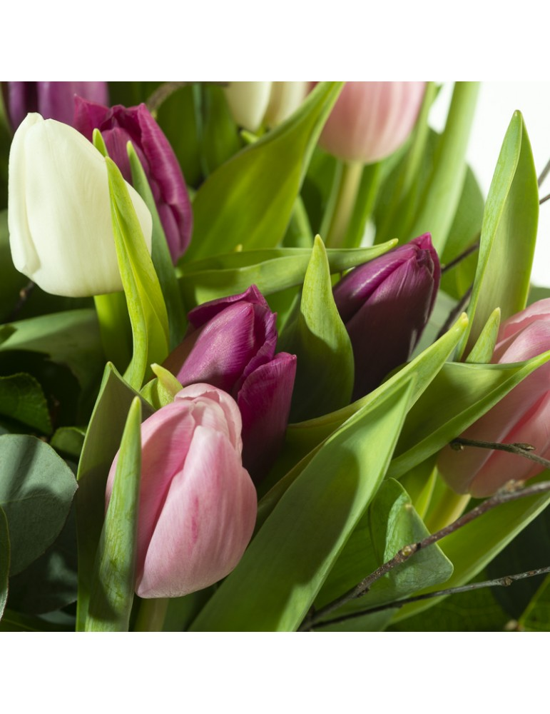 Tulipes roses blanches et mauves