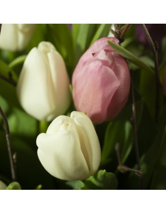 Tulipes blanches et roses