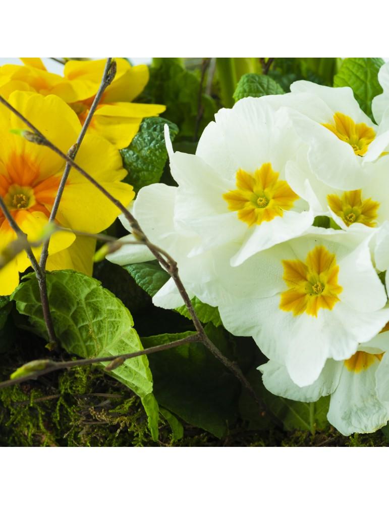Primevères jaunes et blanches