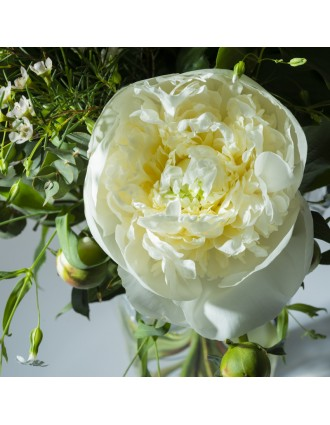 Pivoine blanche