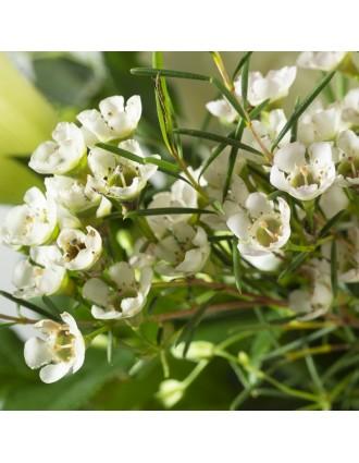 Fleurs wax blanches