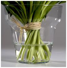 Niveau d'eau pour tulipes